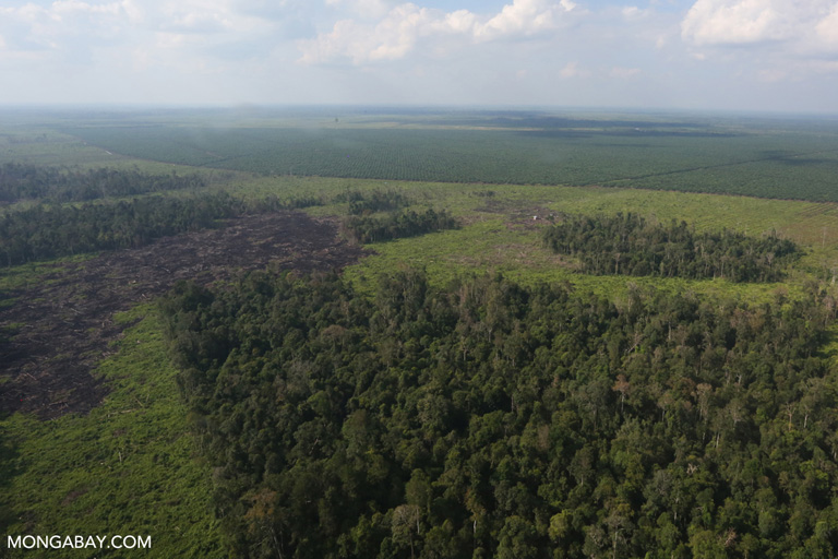 Illegal forest clearing within a timber concession
