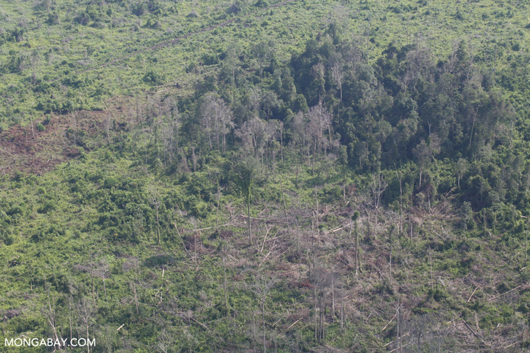 Degraded peat forest