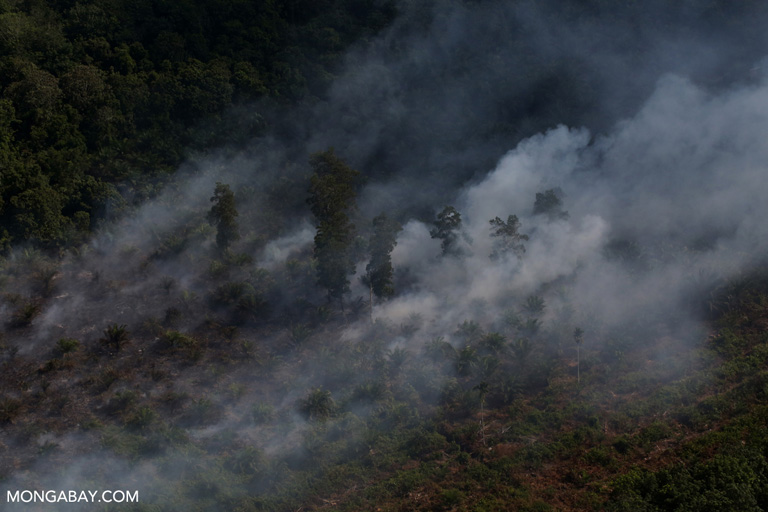Haze rising from an oil palm plantation and forest in Riau