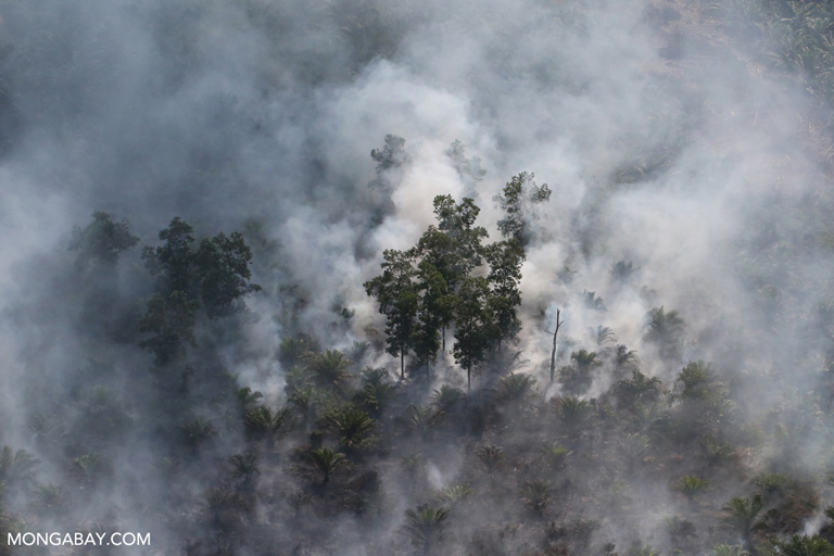 Fire set for forest-clearing in Riau in 2015. Photo by Rhett A. Butler