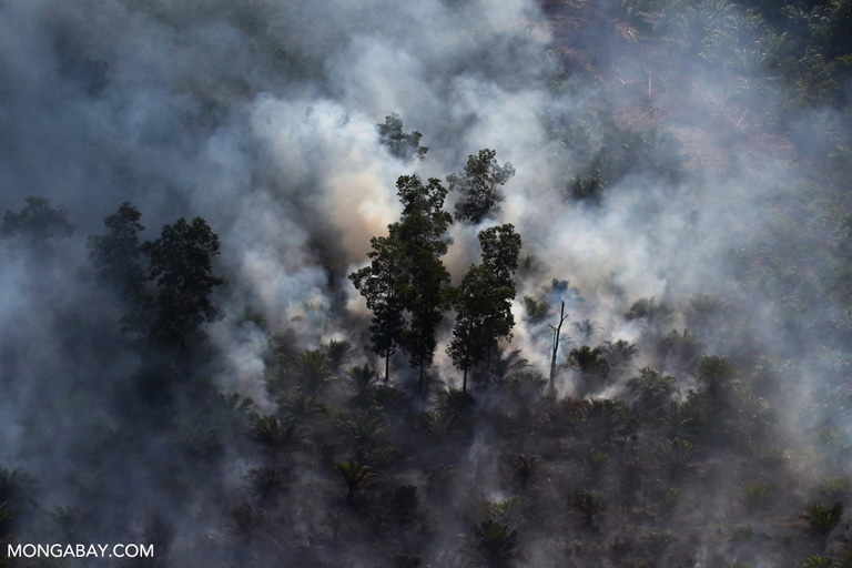 Fire being used to clear land around an oil palm plantation in Riau, Sumatra. Photo by Rhett A. Butler