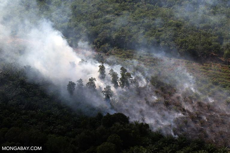 Peat fire in Riau, Sumatra. Photo by Rhett A. Butler