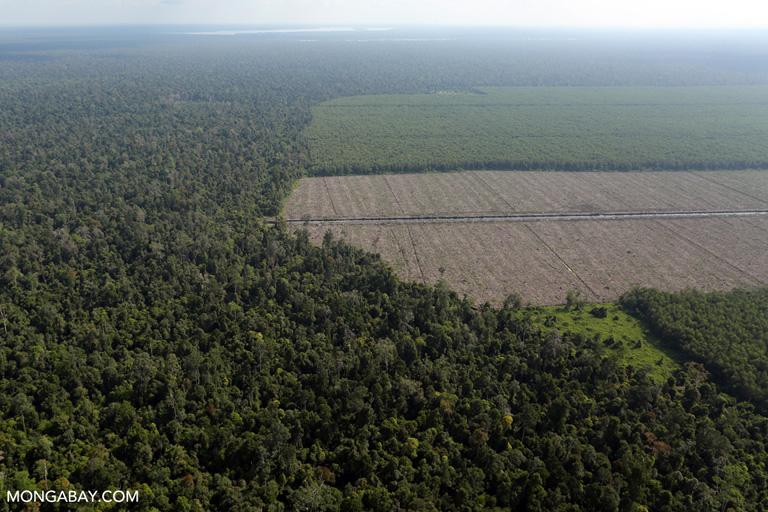 Timber plantation