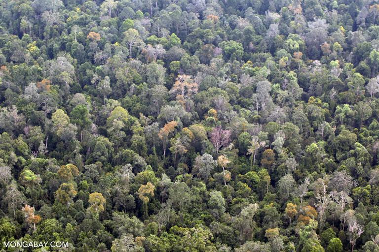 Lowland rainforest in Sumatra