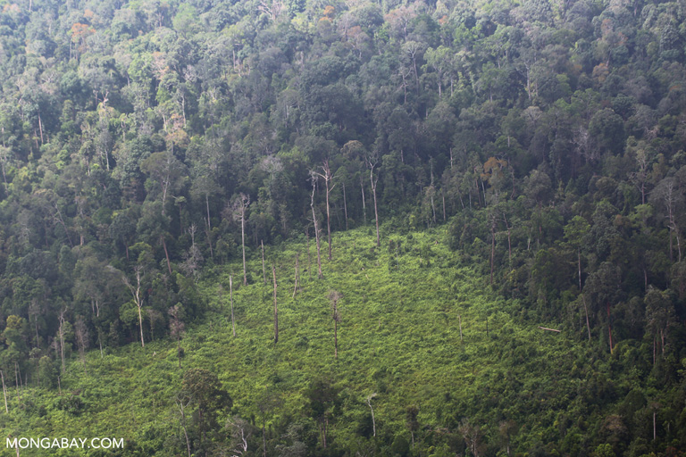 Destroyed peat forest