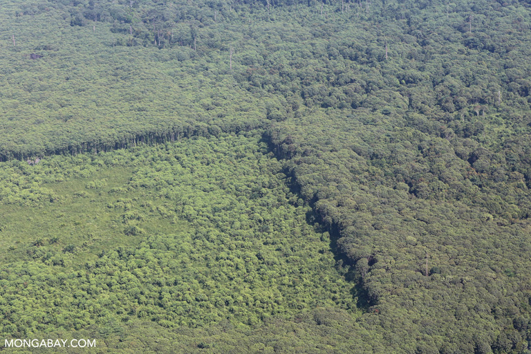 Cleared forest in Tesso Nilo