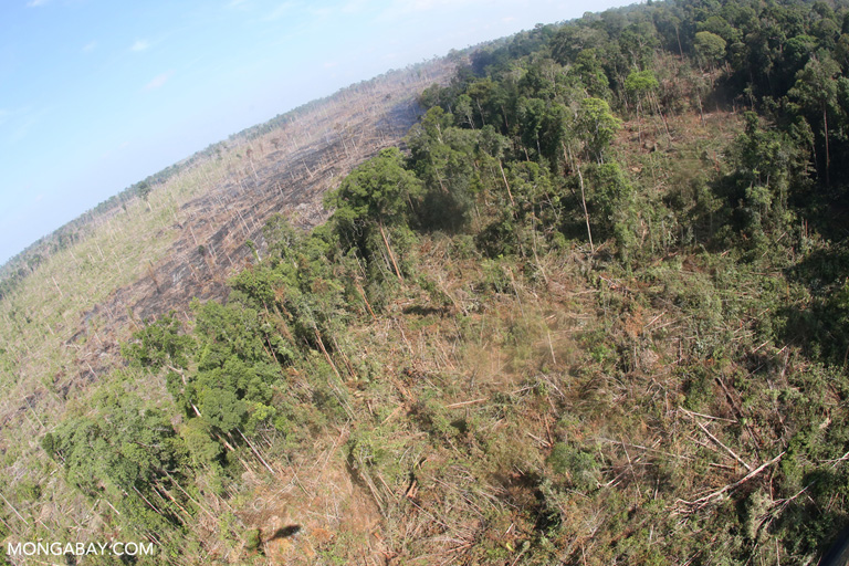 Illegal clearing and burning inside Tesso Nilo