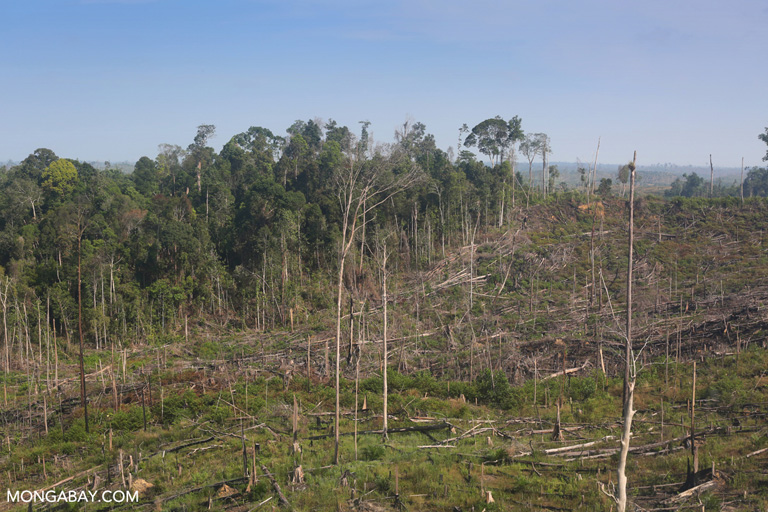 Illegal logging for palm oil in Tesso Nilo