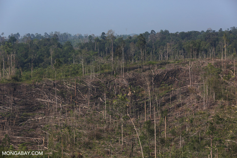 Cleared forest inside Tesso Nilo National Park