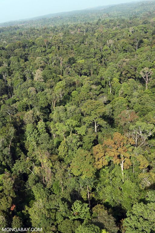 Tesso Nilo rainforest