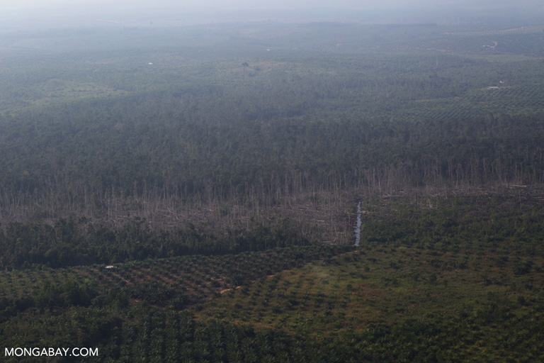 Cleared peat forest