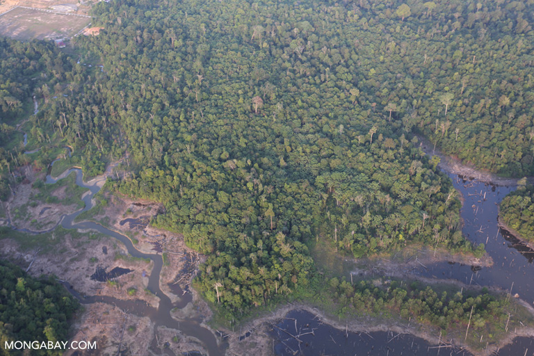 Rainforest dried peatland