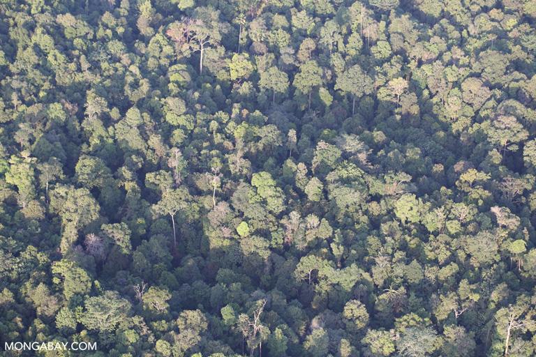 Sumatran rainforest near Pekanbaru