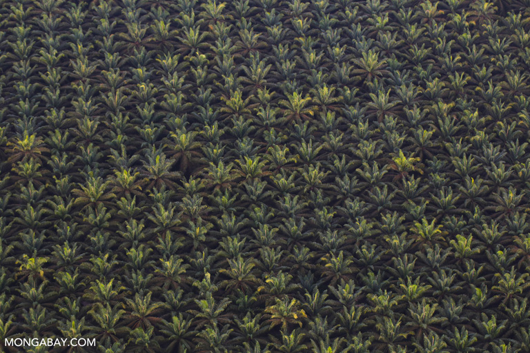 Oil palm plantation in Riau. Photo by Rhett A. Butler.