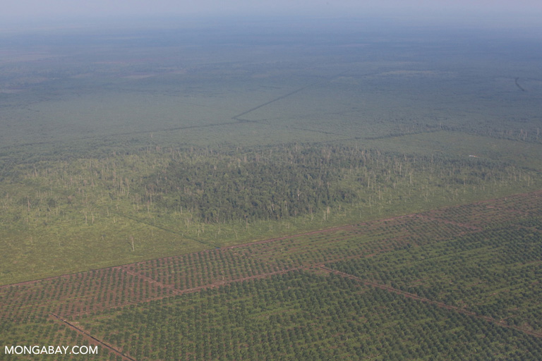 Forest fragment in an oil palm plantation
