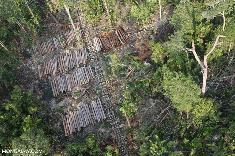 Stacks of rainforest timber in Indonesia