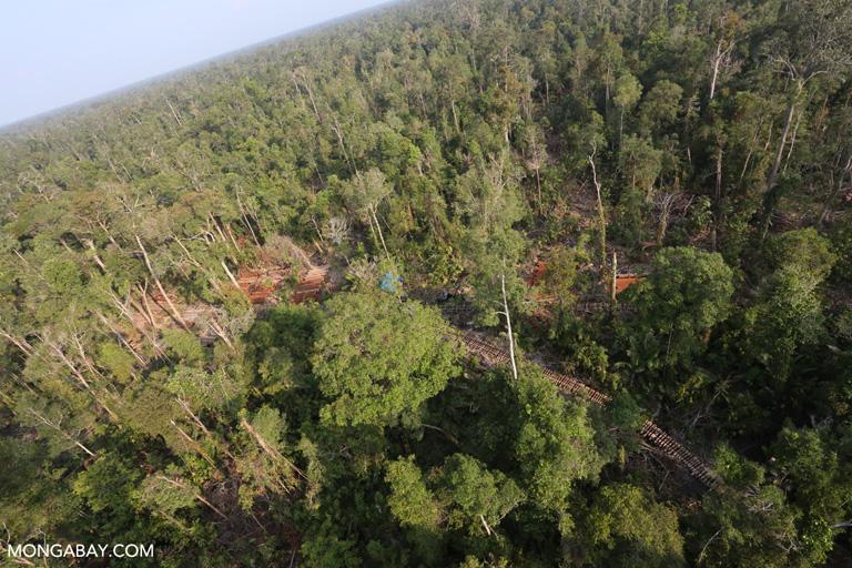 Logging concession in Indonesia