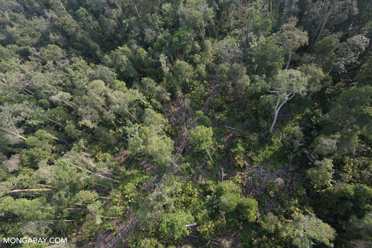 Logging concession in Sumatra