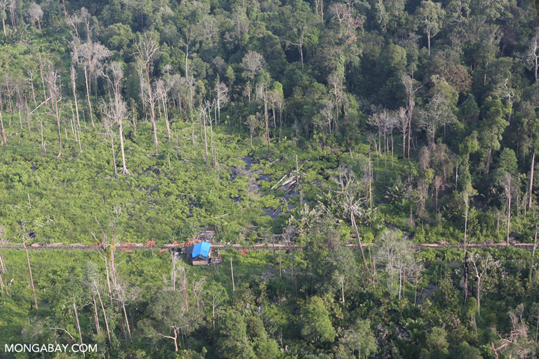 Logging village in Indonesia