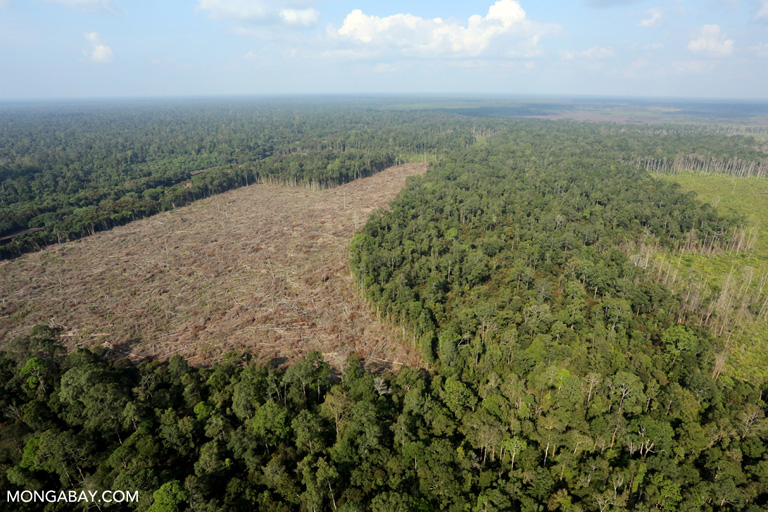 Illegal deforestation for palm oil