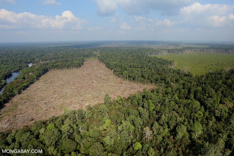 Illegal forest clearing for palm oil production in Riau, Sumatra in 2015. Photo by Rhett A. Butler.