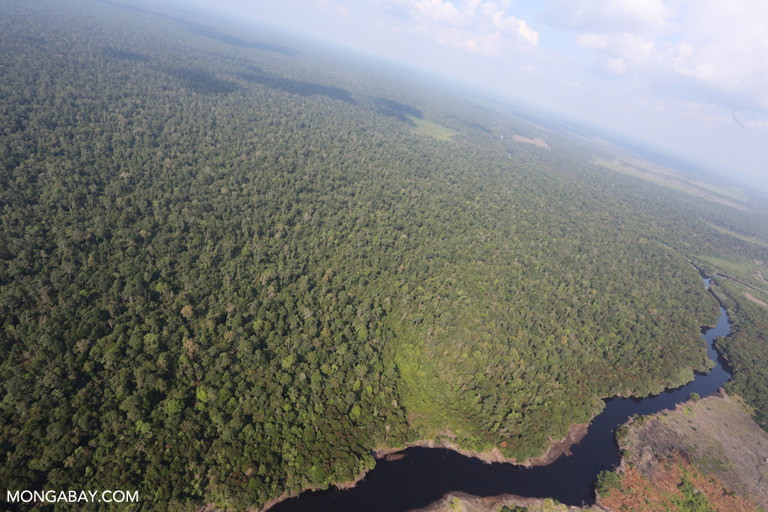 Peat forest