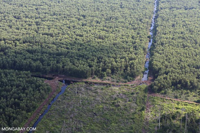 Acacia and cleared peatland