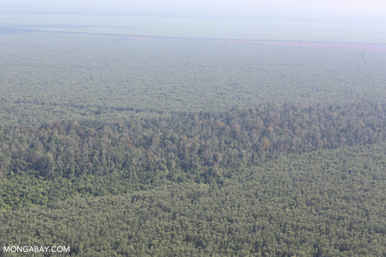 Acacia and peat forest reserve