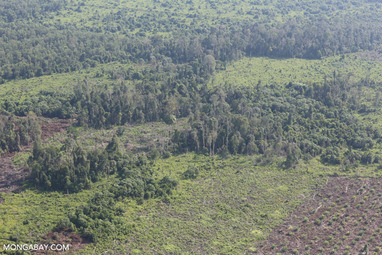 Peat land being cleared for oil palm