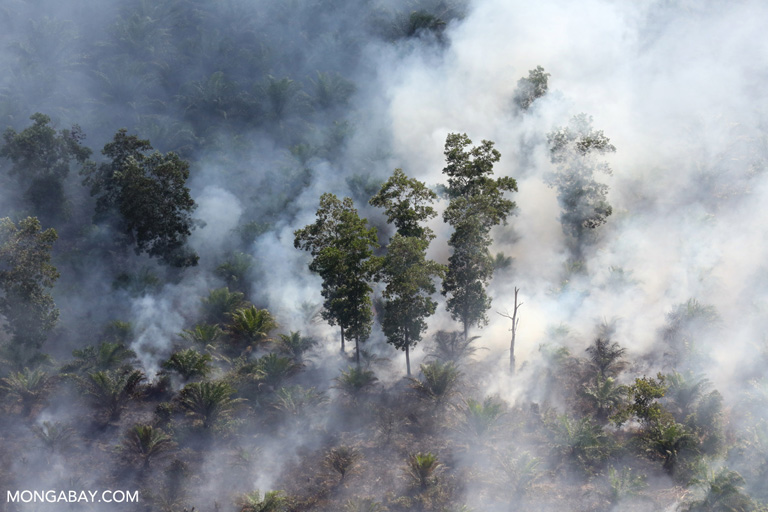 Smoke rising from a forest fire in Riau