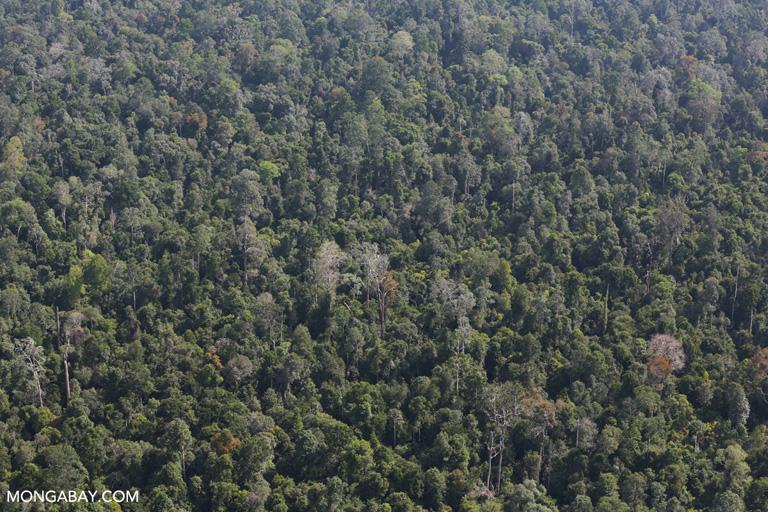 Rainforest on peatland