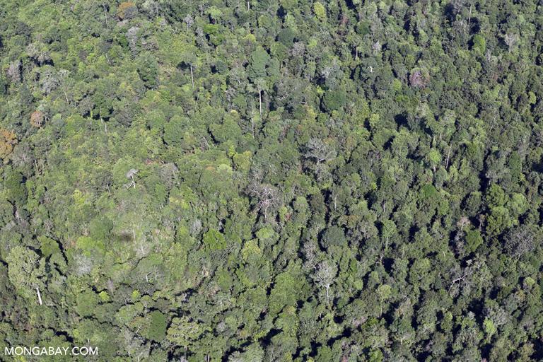 Rainforest in Riau