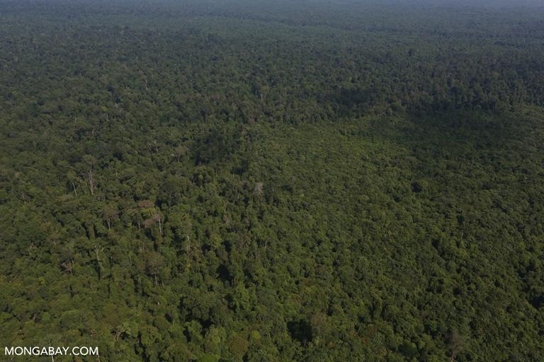 Degraded forest near Tesso Nilo