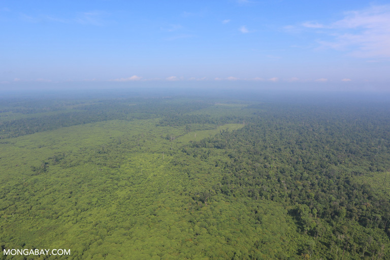 Cleared forest on the edge of Tesso Nilo