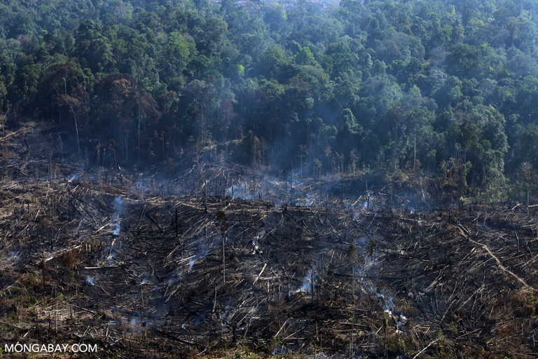 Fire burning within Tesso Nilo National Park in Riau Province in 2015. Photo by Rhett A. Butler