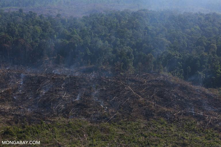 Burning within Tesso Nilo National Park