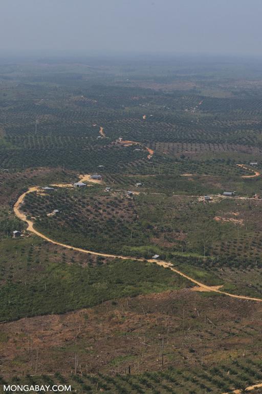Oil palm plantations in Tesso Nilo