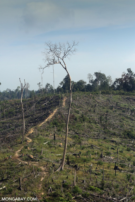 Illegal logging in Tesso Nilo
