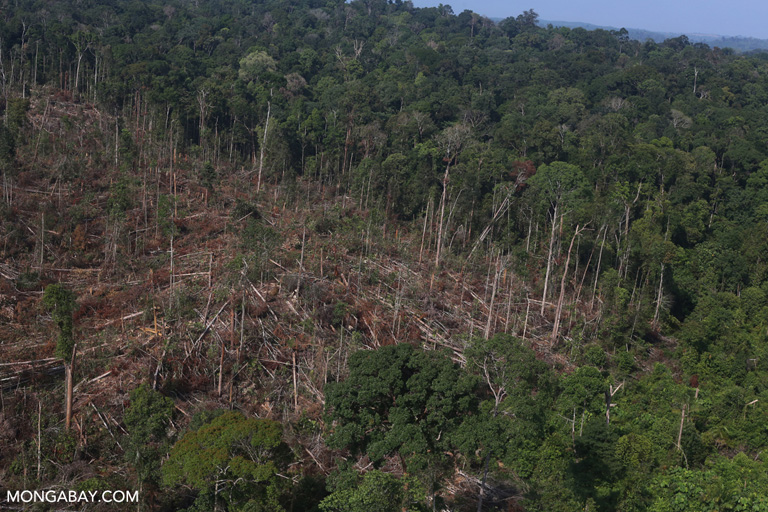 Illegal logging in Tesso Nilo