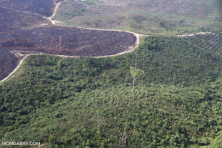 Burned areas in Tesso Nilo