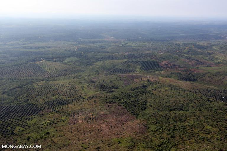 Deforested landscape in Tesso nilo