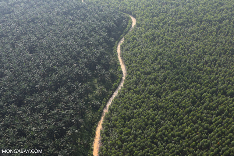 Acacia wood fiber plantation and oil palm