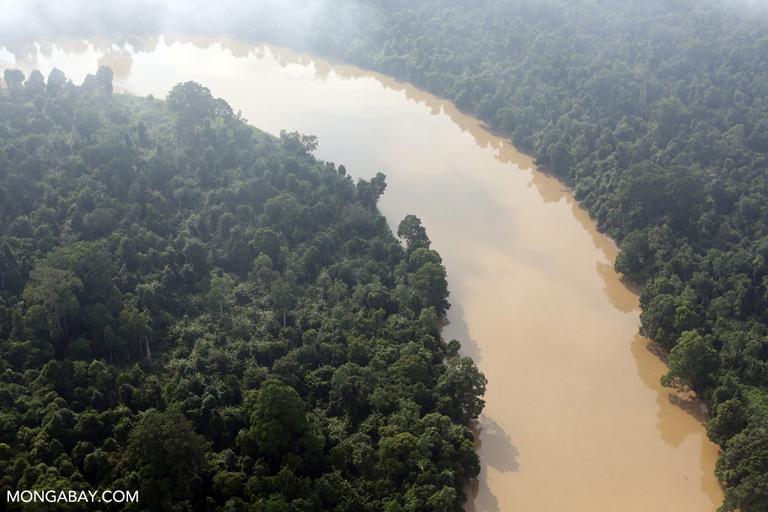 Peat river