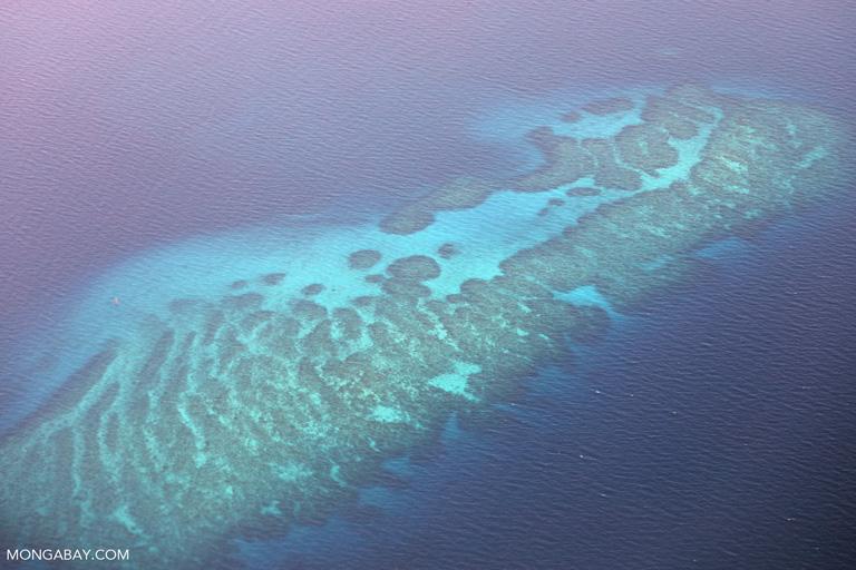 Aerial view of coral reef off Komodo