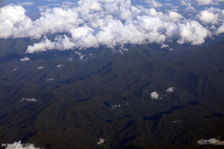 Rainforest on Sumbawa