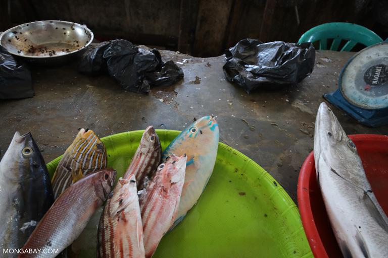 Labuan Bajo fish market
