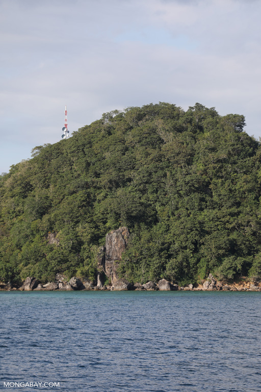Forest near Labuan Bajo