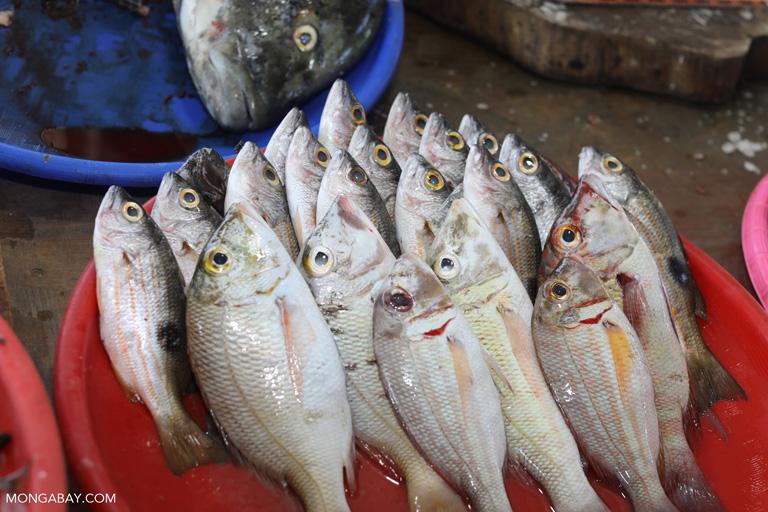 Fish market in Labuan Bajo