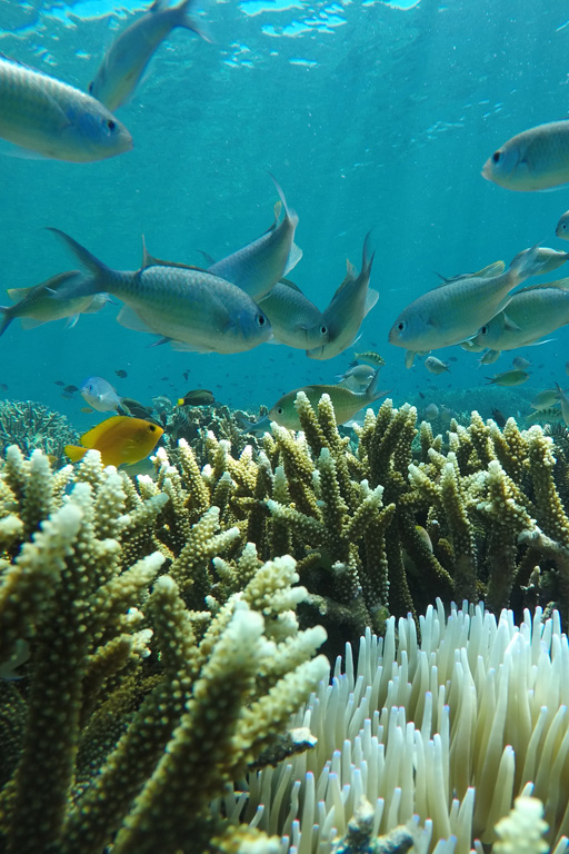 Damselfish, coral, and sea anemones