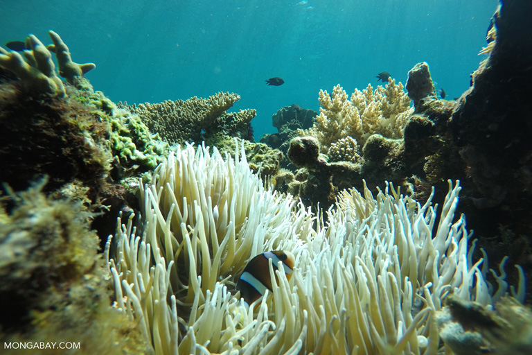 Coral and sea anemones